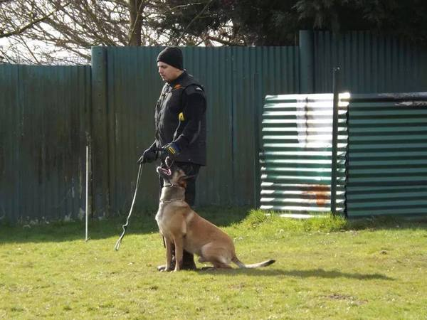 Action K9 security